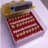60 Pieces Mini Incubator